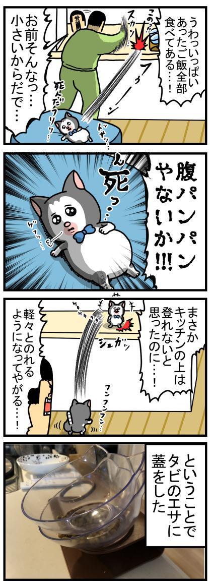 子猫8-2