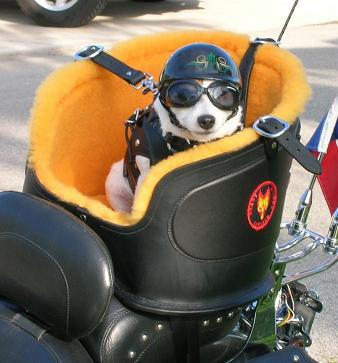 バイクが趣味なんだけどさ犬の散歩バイクでやっても問題ないの?