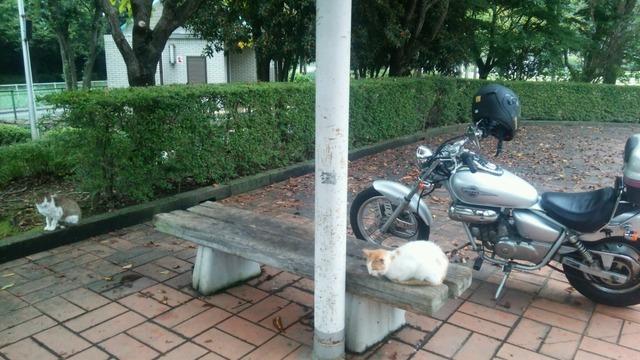 バイクでお鍋を買いに行くスレ -秋-