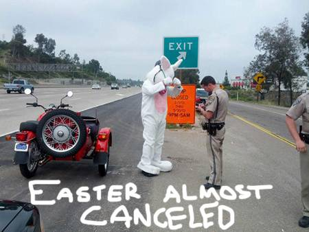 easter-bunny-pulled-over-motorcycle-hog-helmet-ridiculous__oPt