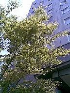 20100426(007)