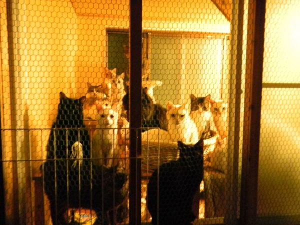 猫22匹と犬6匹