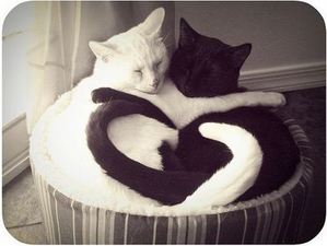 cats-thumb-400x301-8897