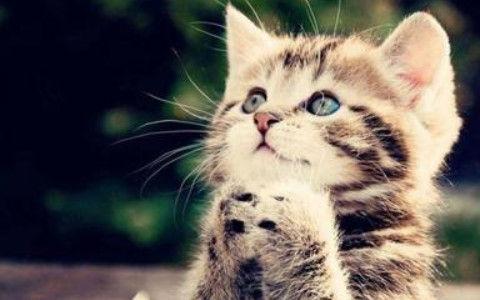 【可愛いw】近所の公園で野良の子猫が生まれとったwww