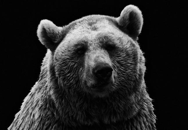 一度人を襲い食べたクマは次も必ず襲いかかってくる