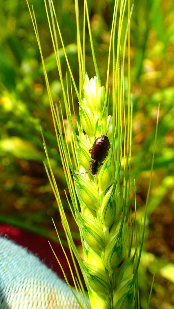 ブログ昆虫P5040051