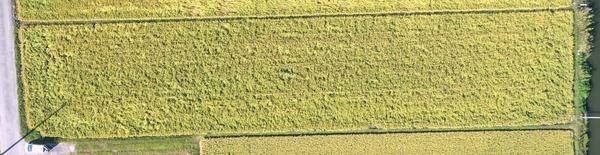 20191005稲収穫前三越