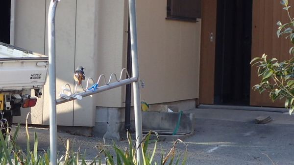 P2080014小鳥ブログ用