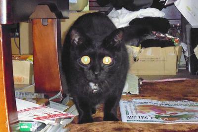 黒猫のクワッ