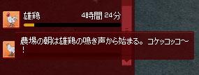 コケッコッコ~
