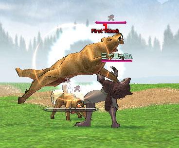 犬に襲われる黒オオカミ