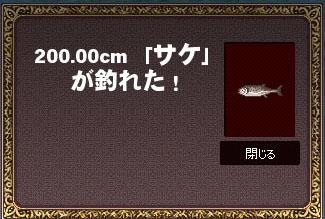 200cmサケw