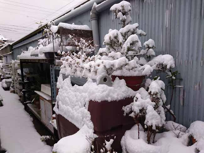 積雪ギャラリー