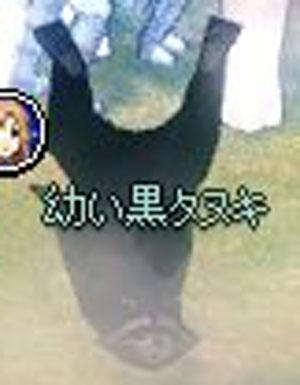 幼い黒タヌキ