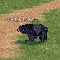 千年物の 幼い黒ヒグマ