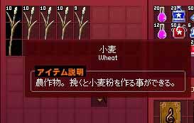 収穫した小麦粉