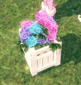 小さなアジサイの植木鉢