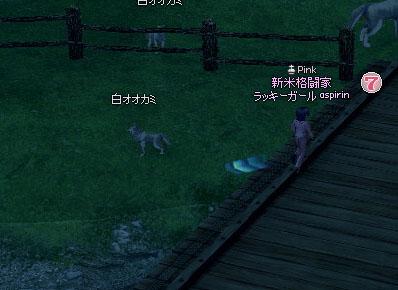 白オオカミ