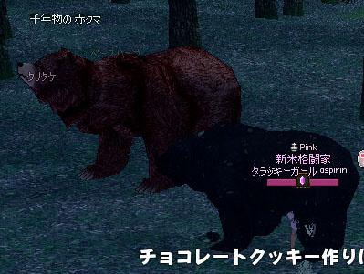 千年物の赤クマ