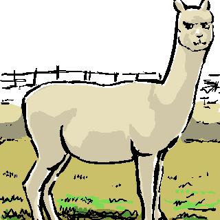 alpacaw