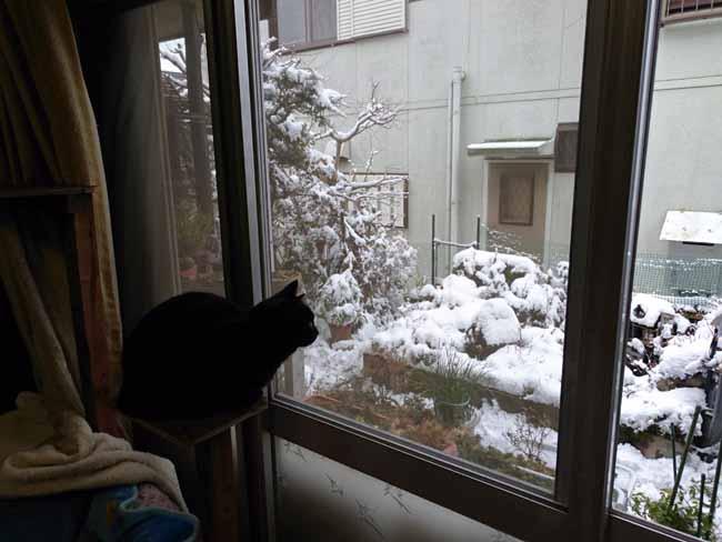 雪を見つめるめたちゃんwwwww