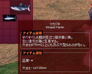 147cmマカジキ