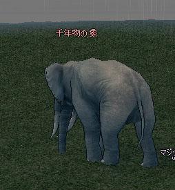 千年物の象