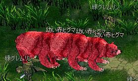 幼い赤ヒグマ