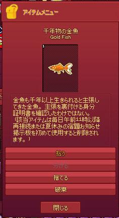 千年物の金魚