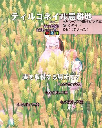 ちょうど良い大麦