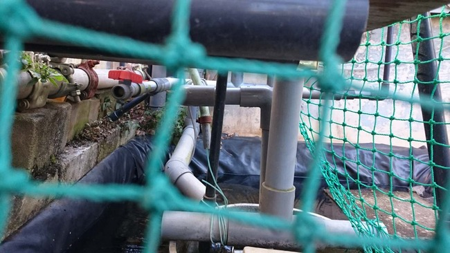 水道管( ゚д゚ )
