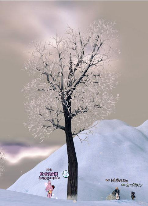 こっちの木