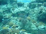 美ら海水族館2