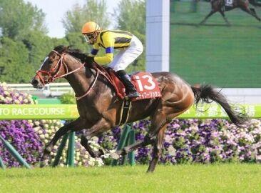 【競馬】 ザダルとデゼル、ムジカとカデナ、