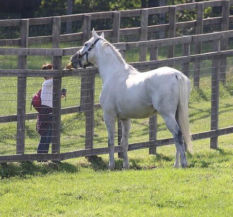 【競馬】牧場見学の女性がゴールドシップに餌をあげてしまう