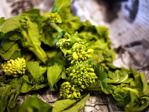 白菜の蕾菜