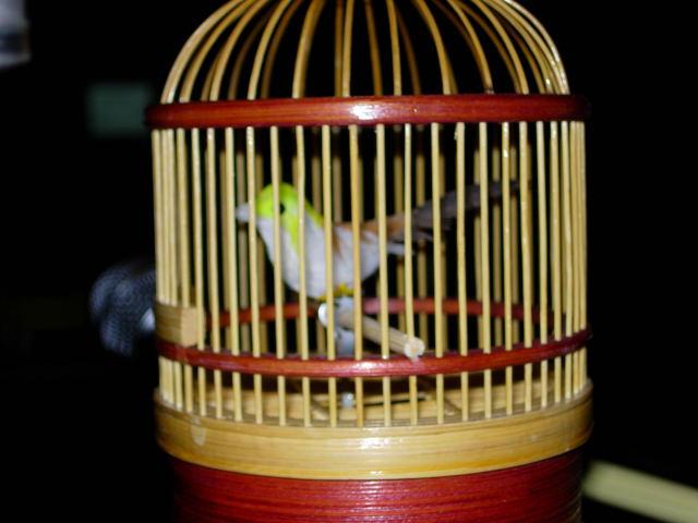鳥かごアップ