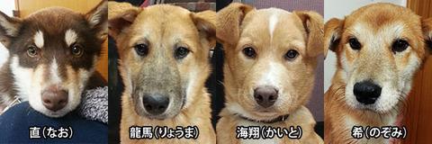 4頭の保護イヌ
