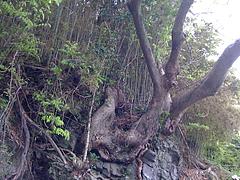 20100423_anakannon3046