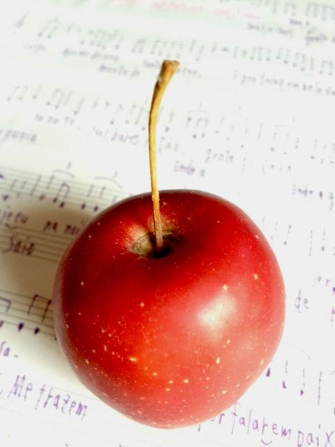 20111130_apple