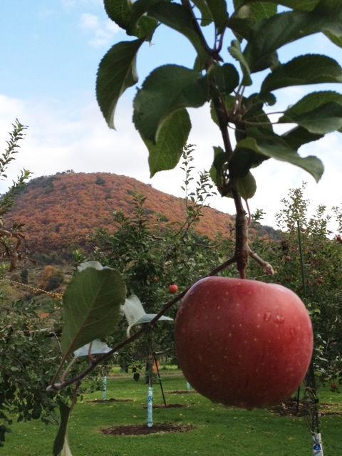 20111117_apple