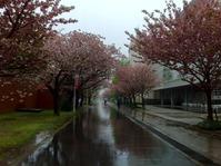 20120427funabashi