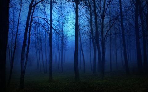hd-wallpapers-spooky-forest-at-night-2560x1600-wallpaper