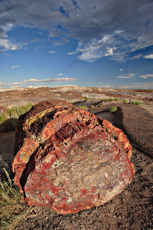 Petrified_forest_log_1_md
