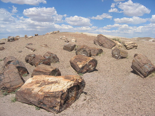 1024px-Petrified_Forest_National_Park_Wood