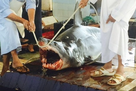 Shark leaps to death on Emirati fishing boat