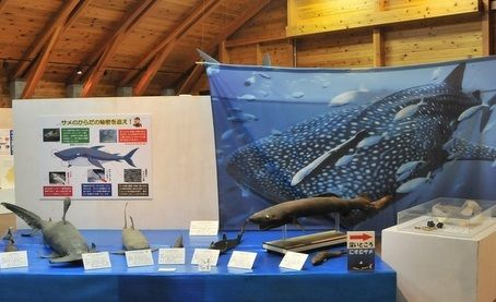 海の博物館の企画展