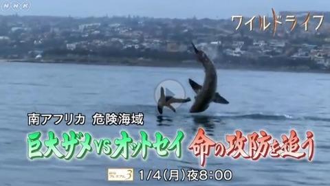 サメVSオットセイ 究極の命の攻防 番組