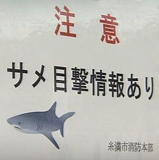 サメ 注意 沖縄