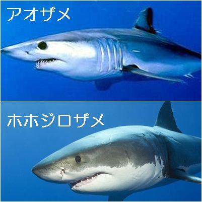 サメ 参考
